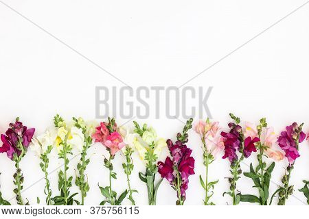 Snapdragon Flower Border On White Background. Flowers Composition. Frame Made Of Flowers On White Ba