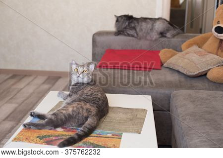 Young Cat Looking Up Lying On Table And Cat Is Sleeping On Couch