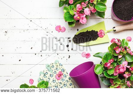Gardening Background With Garden Tolls And Garden Flowers On White Wooden Table. Spring In The Garde