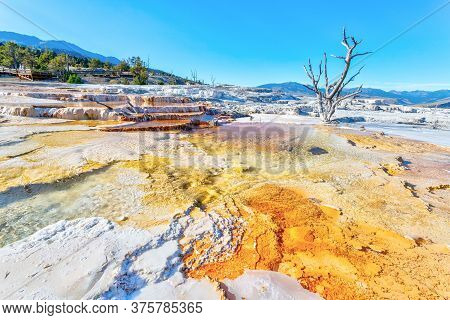 Volcanic Canary Spring Thermal Area Of Main Terrace At Mammoth Hot Springs In Yellowstone National P