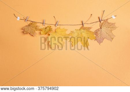 Autumn Maple Leaves  Hang On Clothes Pegs On Yellow Background. Flat Lay, Copy Space. Season Concept