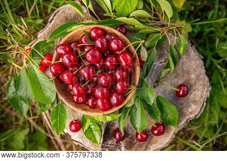 Flat Lay Of Fresh Ripe Juicy Sour Cherries With Leaves In Wooden Bowl