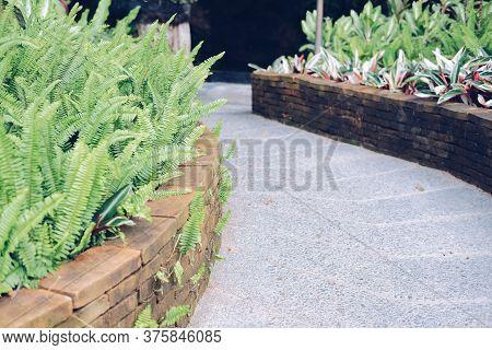 Green Fern Plant Leaves Beside Walkway Pathway In Garden Park. Tranquil Nature Scene