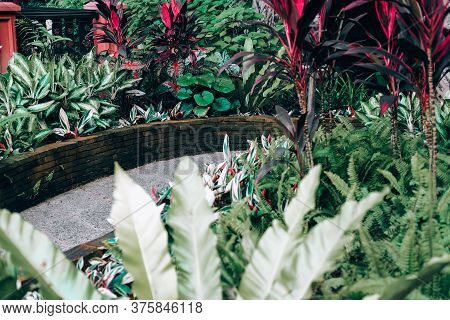 Red Green Plant Leaves Beside Walkway Pathway In Garden Park. Tranquil Nature Scene