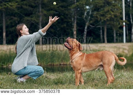 Dogue De Bordeaux Or French Mastiff With Young Woman Playing With Ball At Outdoor Park