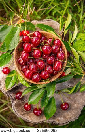 Flat Lay Of Fresh Sour Cherries In A Bowl, Outdoor Shot, Harvest Time