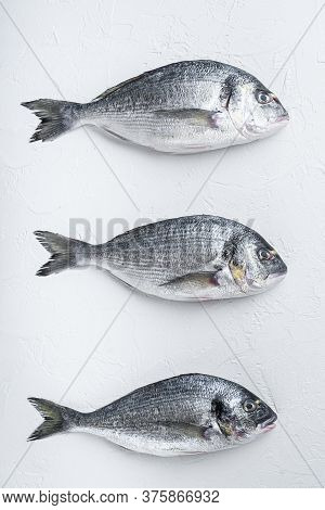 Raw Three  Sea Bream Or Gilt Head Bream Dorada Fish On White Background, Top View.