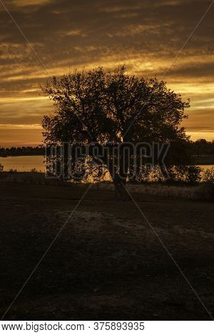 Silhouette Tree As The Sunrise Or Sunset Reflects In The Lake