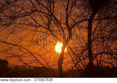 Sunset Behind The Tree Branches From The Capital Of Spain, Madrid.