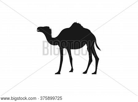 Camel Graphic Icon. Camel Black Sign Isolated On White Background.