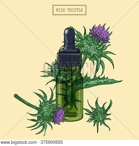 Milk Thistle Flowers And Green Glass Dropper, Hand Drawn Illustration In A Retro Style