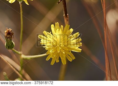 Parts Of A Yellow Flower, Pistil, Antenna, Petals, Close-up, Macro Photography