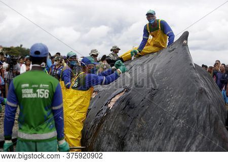 Salvador, Bahia / Brazil - August 30, 2019: A Humpback Whale Dies While Running Aground On Coutos Be