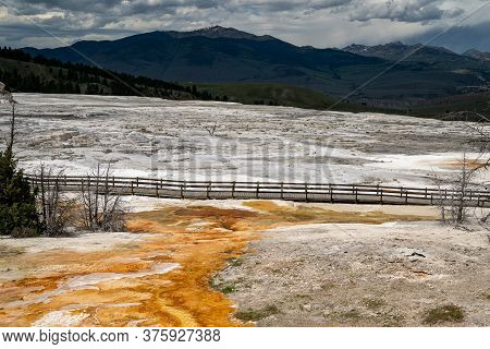 Empty (no People) Boardwalk In Mammoth Hot Springs Terraces Area In Yellowstone National Park