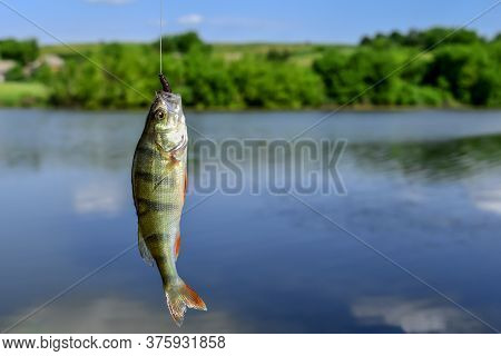 Bass-fish Hanging On A Fishing Hook Against The Background Of A Spring-summer Landscape With Blue Wa