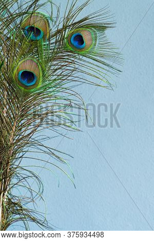 Blue Rendered Wall Background With Peacock Tail Feathers Border