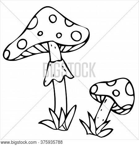 Amanita Poisonous Mushrooms, Poison, Witchcraft, Vector Decorative Element For Halloween Celebration