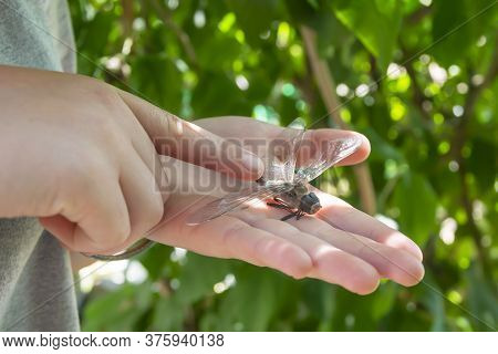 Dragonfly On The Palm Close Up. Background Of Green Leaves In Summer. The Index Finger Is Aimed At T