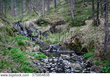 Small Creek In Pine Forest With Rocks In Foreground On Tara Mountain In Serbia Forest Creek In Natur