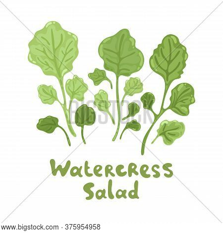Watercress Fresh Culinary Plant. Cute Flat Illustration. Green Seasoning Cooking Herbs. Hand Drawn V