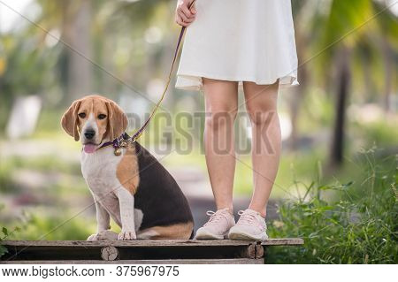 Asian Woman Together With Dog As Best Friend. Solo Outdoor Lifestyle At Park.