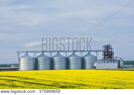 Several Granaries With A Field Of Blooming Canola In The Foreground