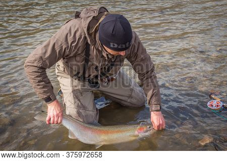 Kalum River, British Columbia, Canada - April 11th, 2017: An Angler Unhooking A Fly From A Steelhead