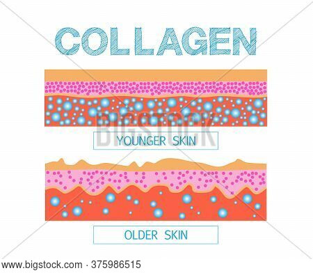 Collagen , Protection Skin ,  Skin Changes Over A Lifetime, Healthy Vector Designใ