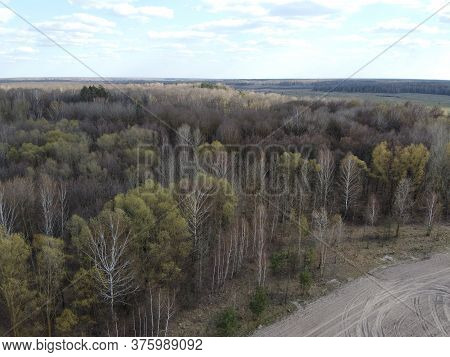 Leafless Spring Forest, Aerial View. Forest Terrain.