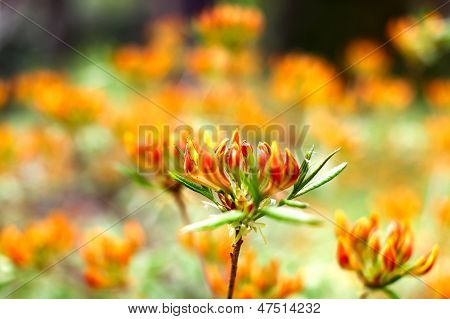 Field Of Beautiful Colorful Flowers (shallow Dof)