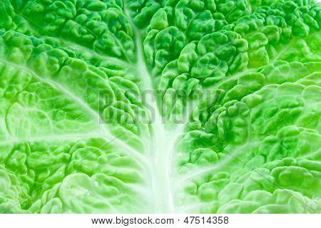 Leaf Of Kale