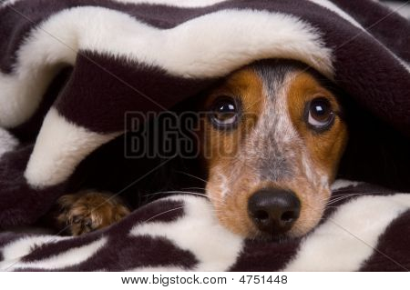 Cute dog tucked in