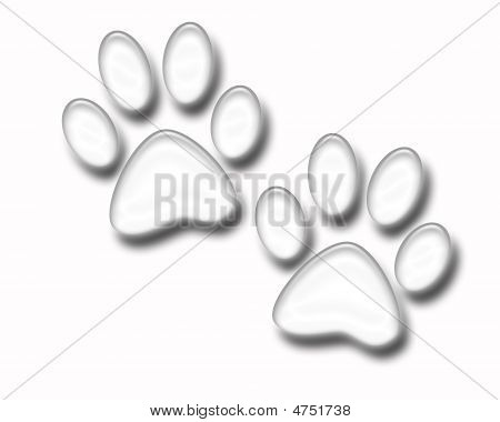 Paw Prints White Isolated