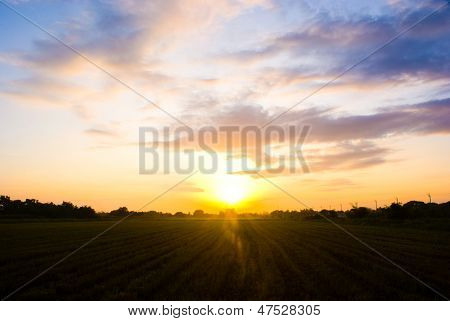sunrise over agricultural green field