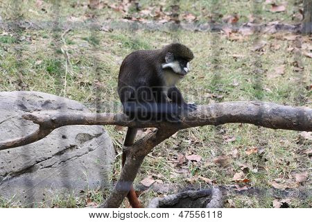 Monkey On A Limb