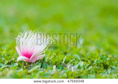 Pink Flower On Grasses