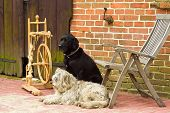 spinning wheel with two dogs on a farm poster