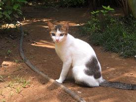 Heterochromic Cat