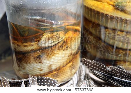 Closeup of Pickled Snakes in Namibia. Africa poster
