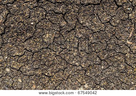 Dry And Cracked Ground With Grass Seeds - Texture, Background