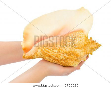 Hands And Big Conch