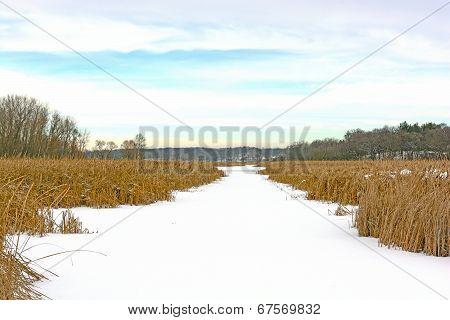 Frozen Creek In Winter