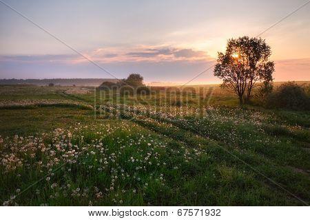 Sunrise In A Rural Field