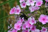 small flower with bumble bee poster