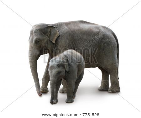Elephants - mother and baby, in Zoo