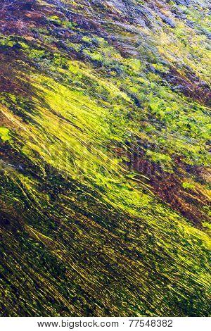 algae in river poster