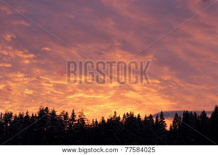Pink sky over the firs