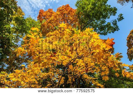 Yellow, Green and Orange Trees, Autumn in Park, Warsaw, Poland