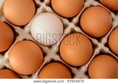A Single White Egg Surrounded By A Number Of Brown Eggs