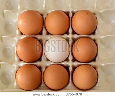 A White Egg Surrounded By Brown Eggs